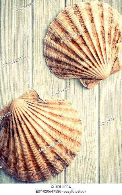 scallops on wooden floor