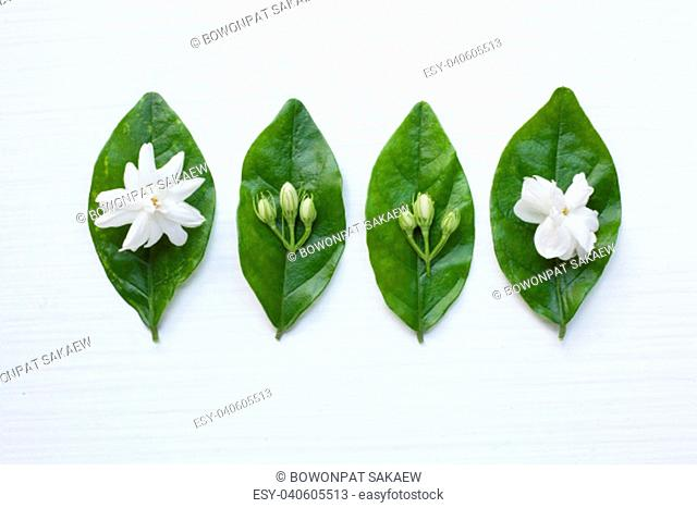 jasmine flower on white background