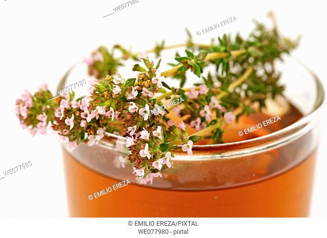 Thyme (Thymus vulgaris) infusion