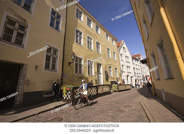 Cyclist at the street in front of the traditional buildings in the old town, Tallinn, Estonia, Baltic States, Europe