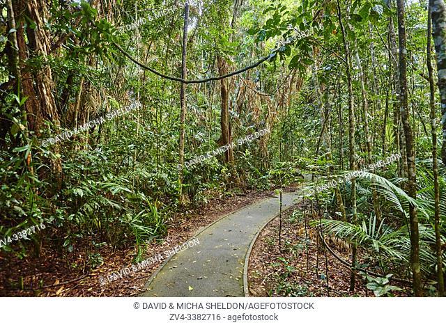 Landscape a little walking path going through a rainforest in spring, Jumrum Creek Conservation Park, Kuranda, Queensland, Australia