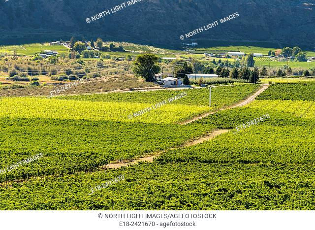 Canada, BC, Oliver. View of vineyards in the valley below Burrowing Owl Winery. One of the many award winning wineries in the Golden Mile of BC's Okanagan...