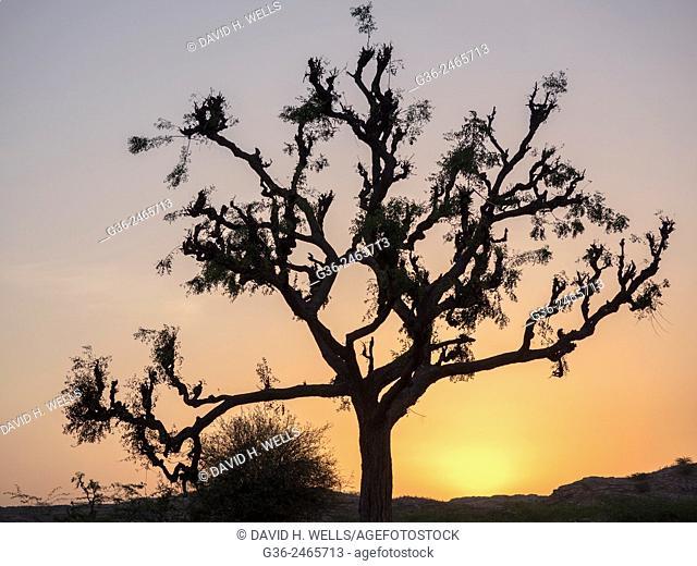 Silhouette of tree in  Chhatrasagar, Rajasthan, India