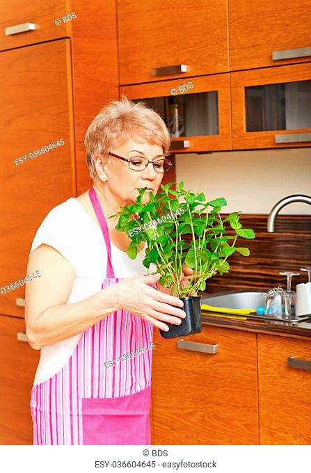 Old woman smelling her mint plant at home in the kitchen