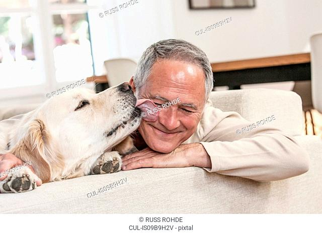 Golden retriever licking smiling mans face