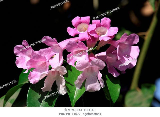 Flower at Ramna Park Dhaka, Bangladesh March 2011