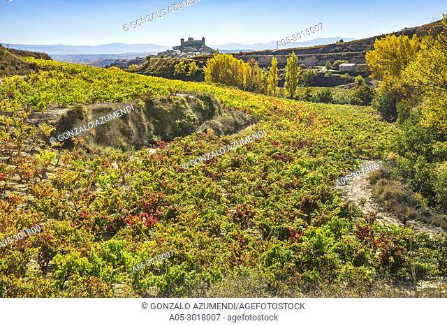 Vineyards in Autumn. In the background, San Vicente de la Sonsierra village. La Rioja. Spain