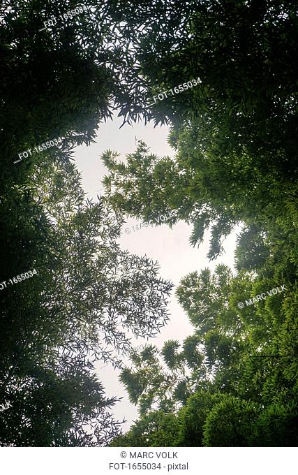 Directly below view of green trees, Kyoto, Japan