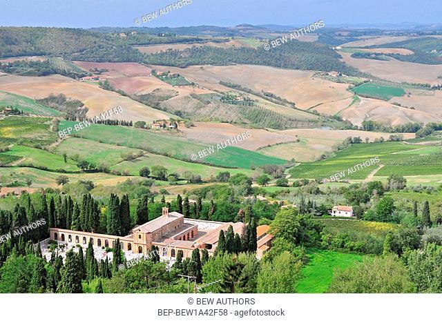 Vineyard near Montalcino, Tuscany, Italy