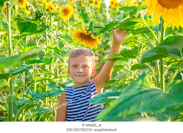 Smiling boy among sunflower field
