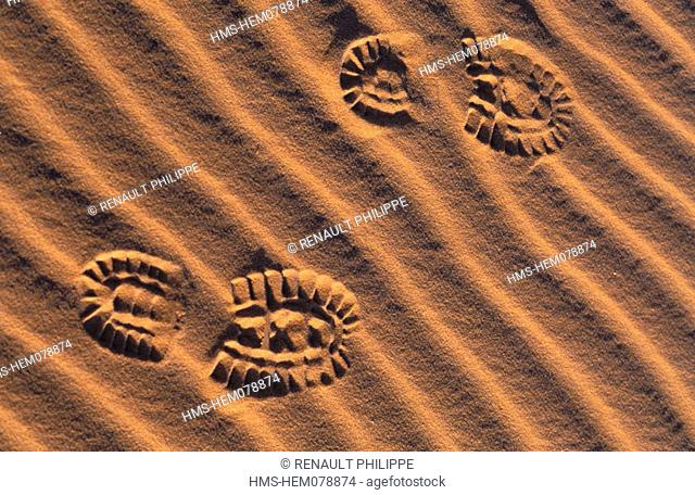 Mauritania, Adrar region, footprints in the desert sand dunes