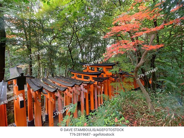 Endless torii shrine gates at Fushimi Inari Shrine, Kyoto, Japan