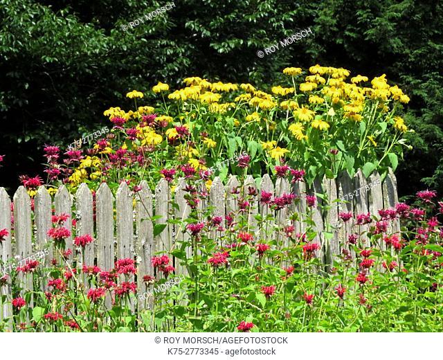 yellow coneflower and bee balm