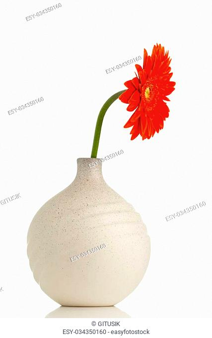 Gerbera flower on the vase, isolated white background