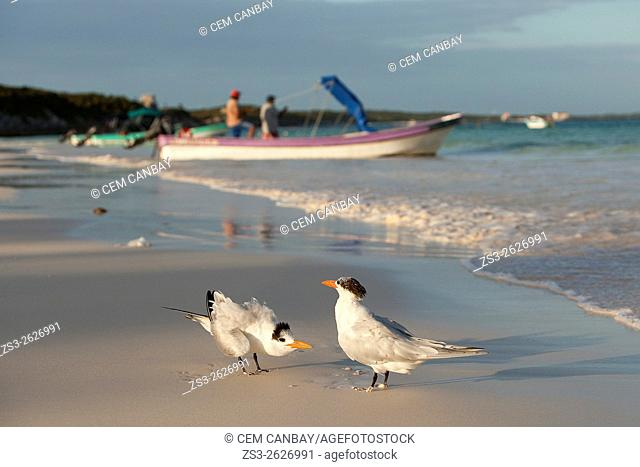 Birds and fishing boats at the beach ,Tulum, Quintana Roo, Yucatan Province, Mexico, Central America
