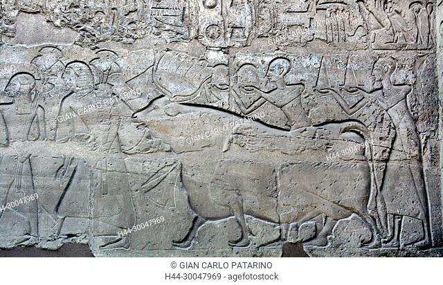 Luxor, Egypt. Temple of Luxor (Ipet resyt): a sacred cow