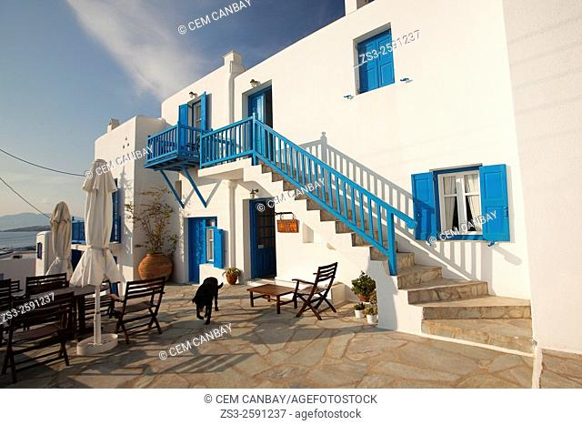 Whitewashed house with blue doors, windows and railings with a black dog in the foreground in town center, Mykonos, Cyclades Islands, Greek Islands, Greece