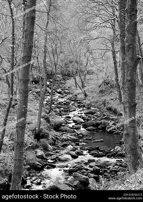 monochrome image of a hillside stream running through mossy rocks and boulders with overhanging forest trees in dense woodland