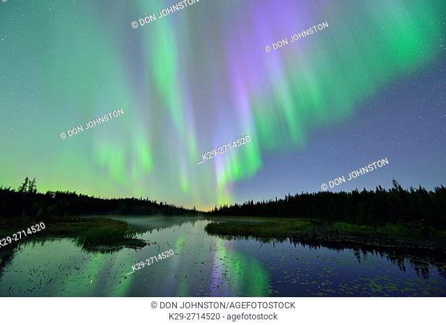 Aurora borealis (Northern Lights) over a beaver pond, Yellowknife, Northwest Territories, Canada