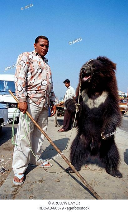 Man with Sloth Bear at rope India Melursus ursinus Ursus ursinus