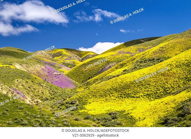 Wildflowers on the Temblor Range above Carrizo Plain National Monument