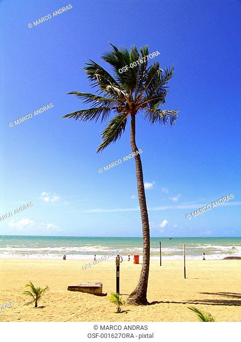 pernambuco peopel relaxing at the beach shore