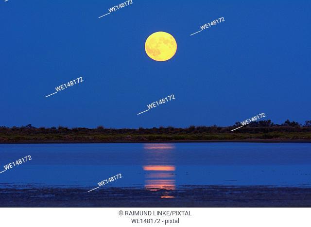 Full Moon over Marshland at Dawn, Saintes-Maries-de-la-Mer, Carmague, Provence Alpes Cote d Azur, Bouches du Rhone, France