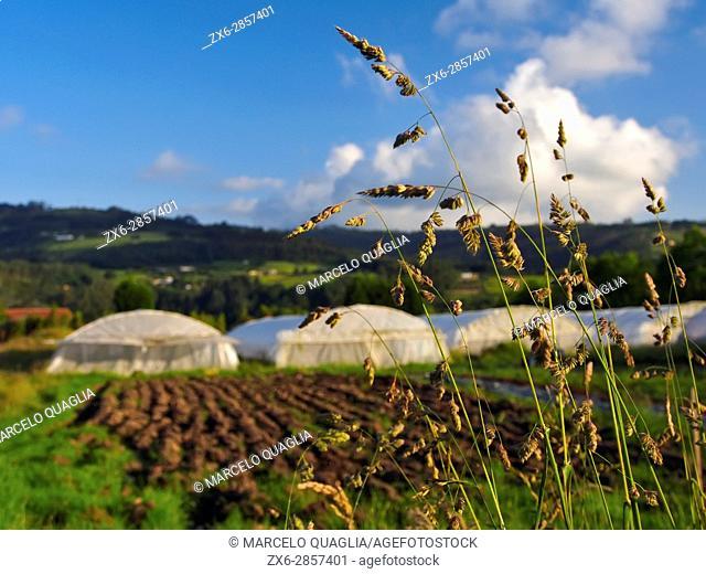 Sprigs and greenhouses. Ecocaracol organic farmhouse. Venta Las Ranas village, Villaviciosa village council. Asturias autonomous community. Spain