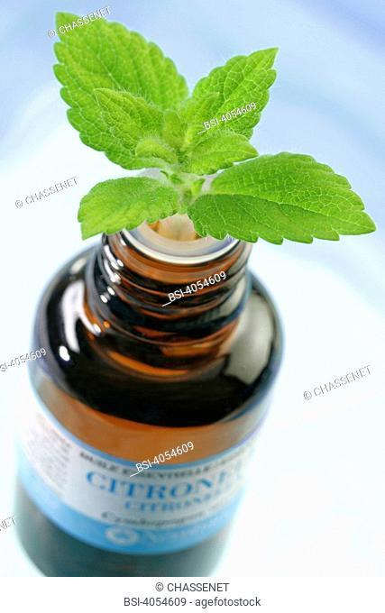 Essential oil of lemongrass