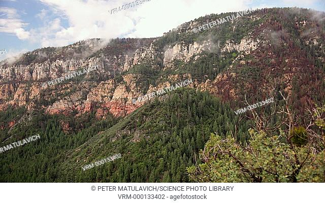 Oak Creek Canyon is a river gorge in northern Arizona that is sometimes described as a smaller cousin of the Grand Canyon because of it's scenic beauty