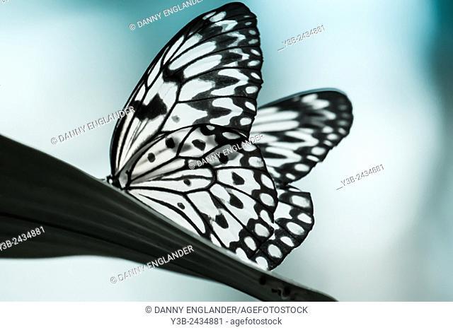 Serene Butterfly Scene