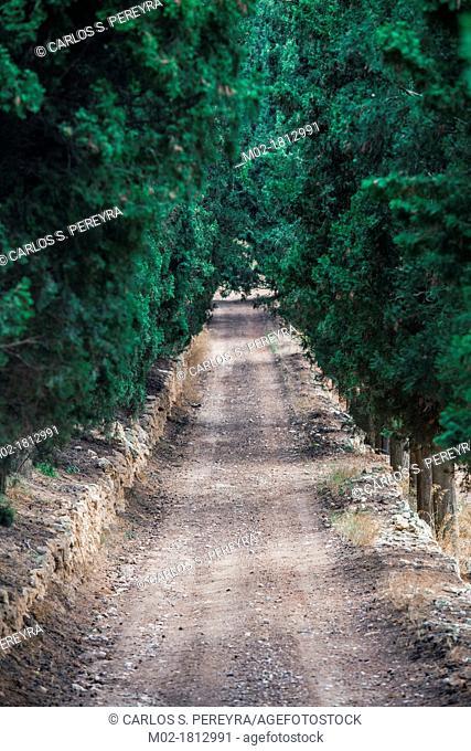 Road in Penedes  Barcelona, Spain
