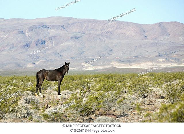 A wild horse takes a watchful stance on grazing land in the American west