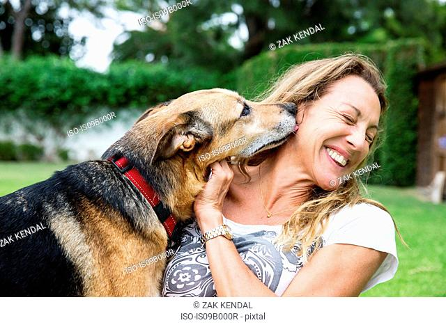 Mature woman in park with dog, dog licking woman's face