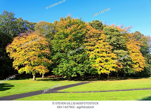 Autumn trees in Thompson Park, Burnley, Lancashire, England, UK
