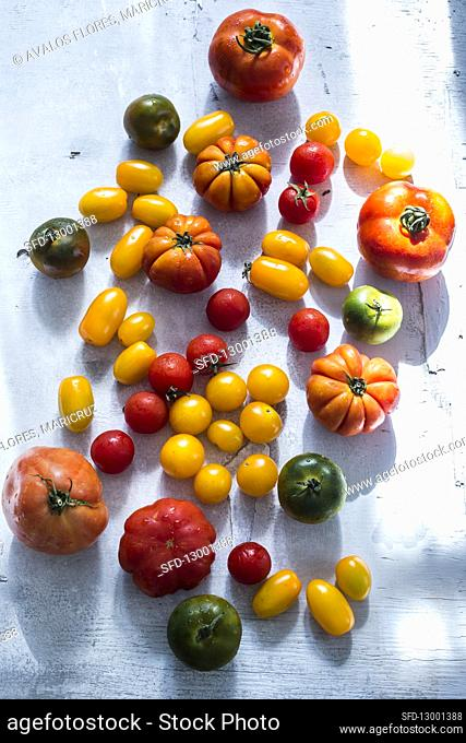 Fresh arvested tomatoes