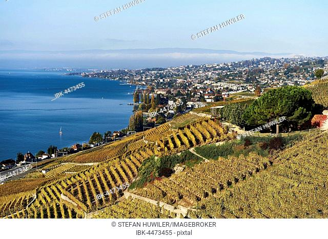 Vineyards in autumn, Lausanne at back, Lavaux, Lake Geneva, Canton of Vaud, Switzerland