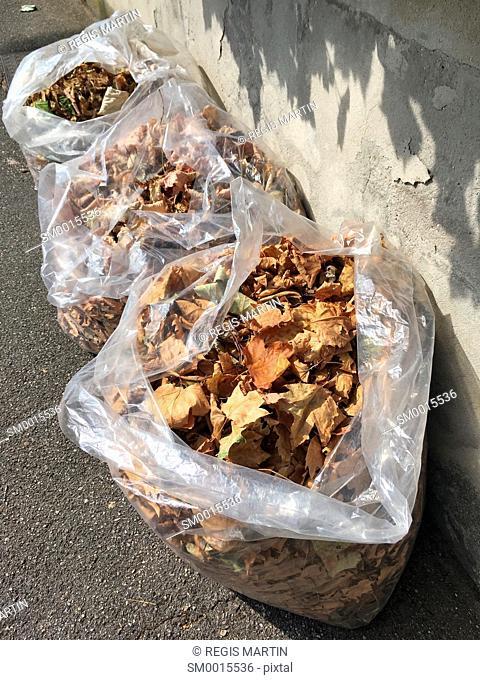 Three plastic bags full of autumn leaves