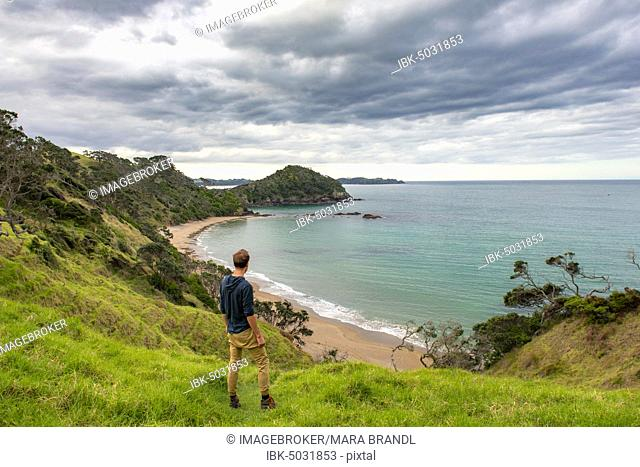 Young man looking over a bay, beach and bay Daisy Bay, Northland, North Island, New Zealand, Oceania