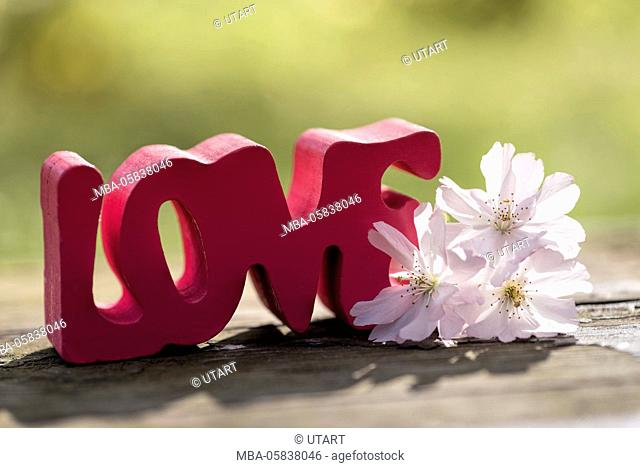 Photography in the back light. Stroke in pink LOVE, decorates with pale pink cherry flowers on old wood bank. light green diffuse background
