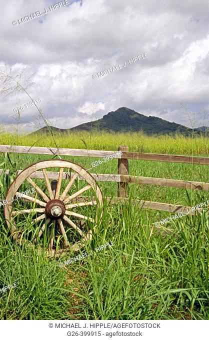 Sugar caen fields near Wailua falls. Island of Kauai. Hawaii. USA