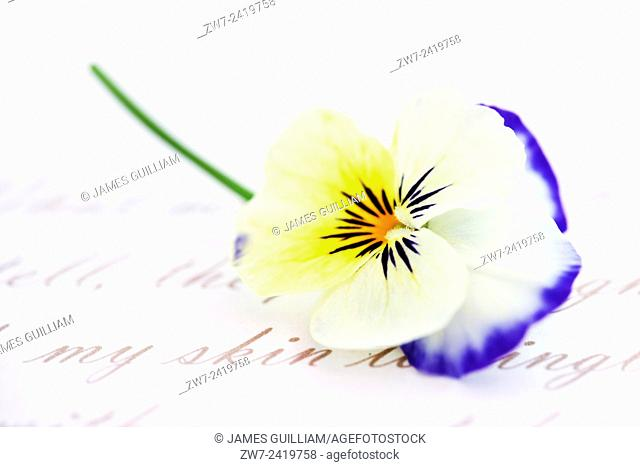 Viola flower with words