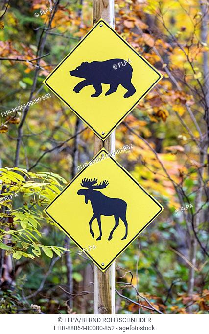 road sign warning of bears and moose crossing, Jacques-Cartier National Park, province Quebec, Canada, October