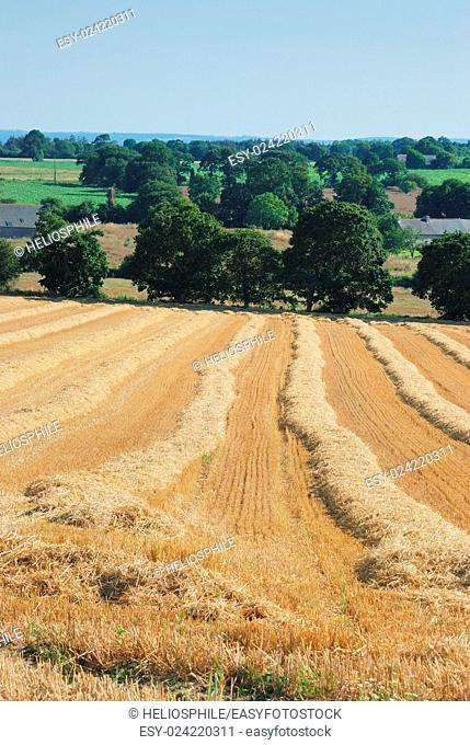 straw in a field after harvest in Brittany in France