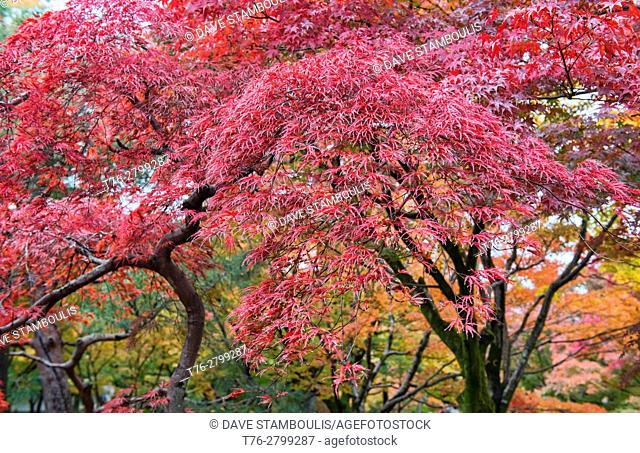 Stunning autumn colors at Tofuku-ji Temple, Kyoto, Japan