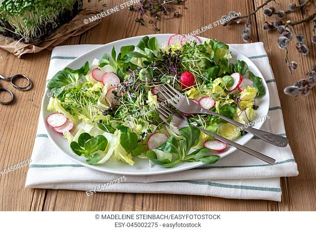 Salad with radishes and freshly grown broccoli and kale microgreens
