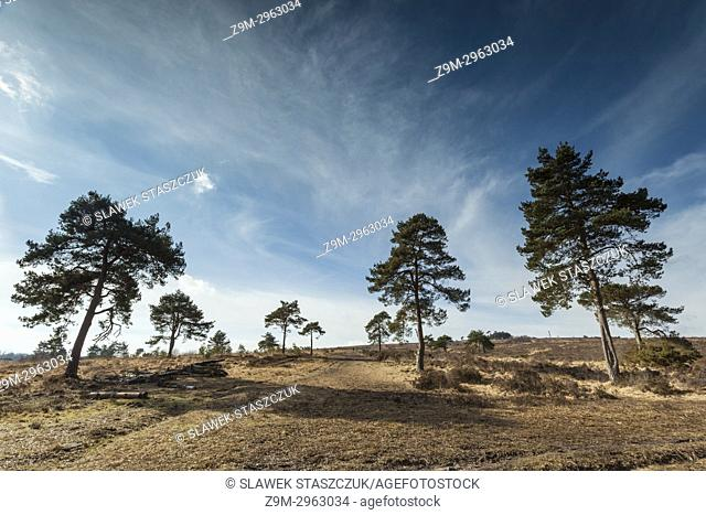 Winter day in Ashdown Forest, East Sussex, England