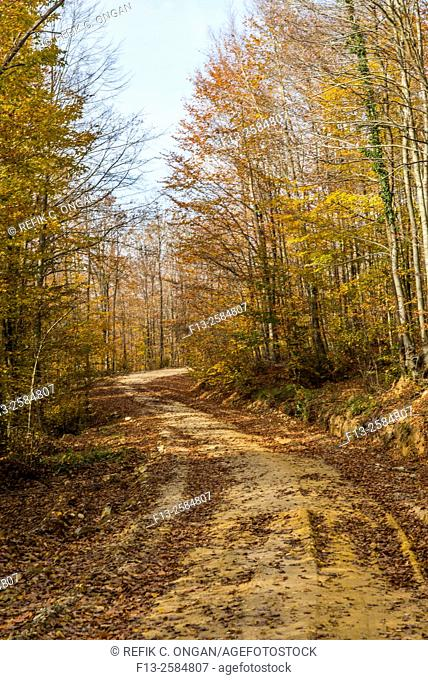 forest road during fall in Bahceköy, Tekirdag