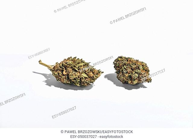 Dry marijuana buds isolated on white background. Traditional herbal medicine, alternative medicine