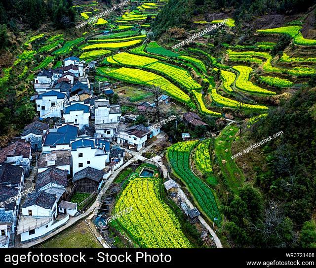 Jiangnan rape open country scenery is beautiful